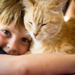Häufigste Auslöser von Tierhaarallergie: Die Katze