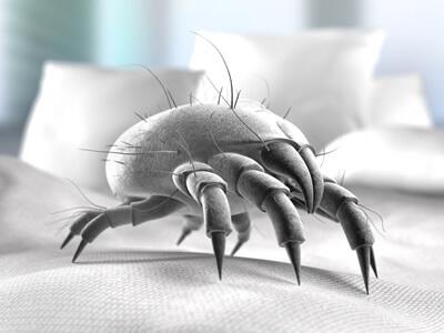 Hausstaubmilben im Bett verursachen bei vielen Menschen Beschwerden